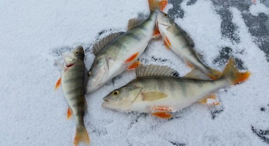 рыба зима