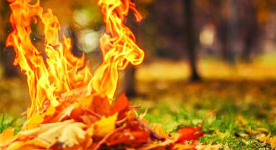 листья_огонь